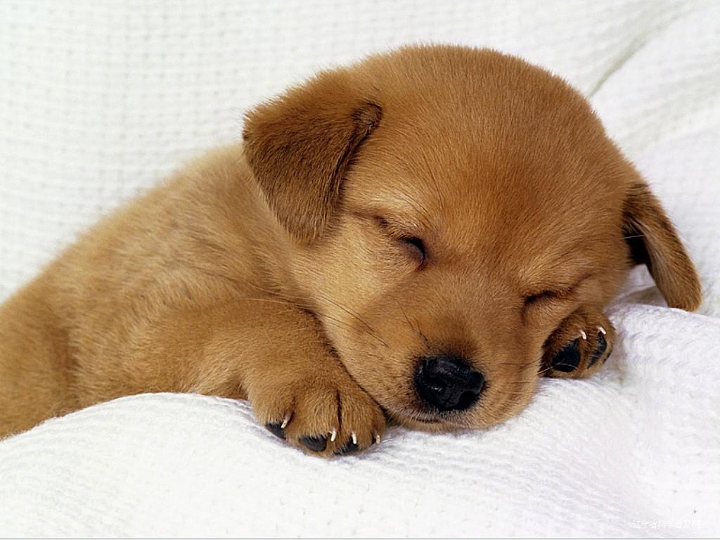 スポーツが上手くなるための睡眠法